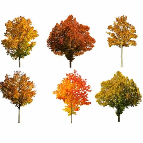 fall tree overlays for Photographers