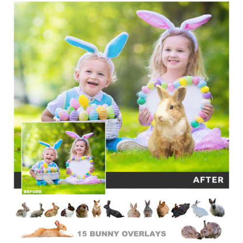 Rabbit overlays for photos in png format