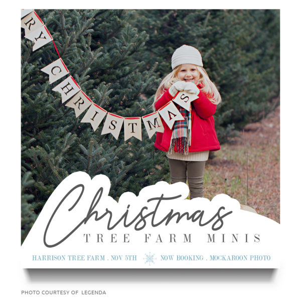 Christmas Tree Farm Mini Sessions.Christmas Tree Farm Minis Marketing Board
