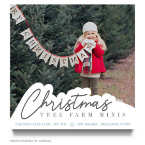 Christmas Mini Template for Photographers