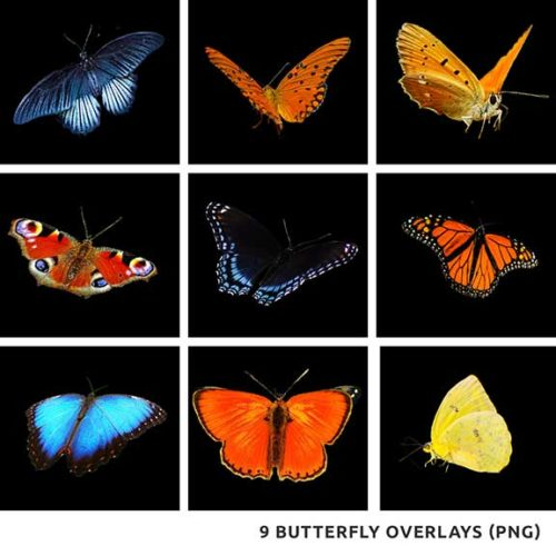 Butterfly Overlays PNG