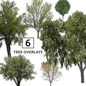Tree Overlays for Photoshop in Transparent PNG Format
