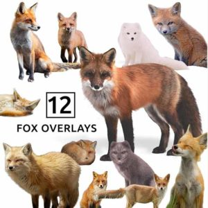 fox png overlays
