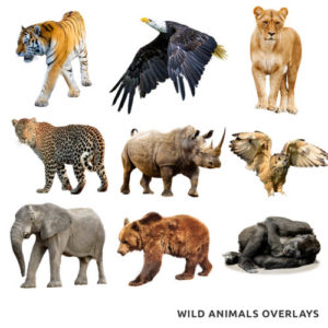 wild animal overlays