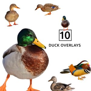 Duck Overlays