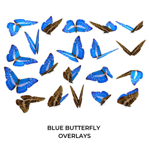 Blue Butterfly PNG Overlays