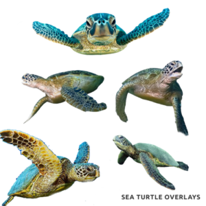 Sea Turtle Overlays