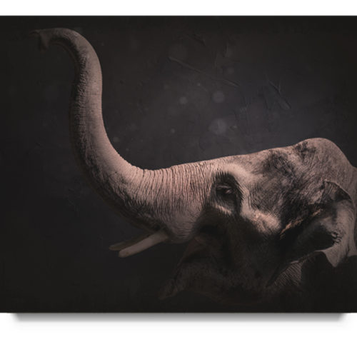 Elephant Newborn Digital Background