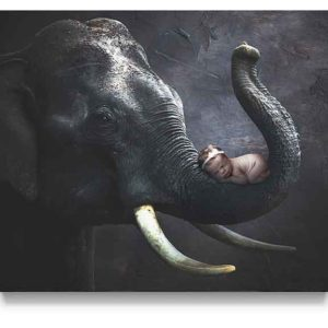 elephant trunk digital background