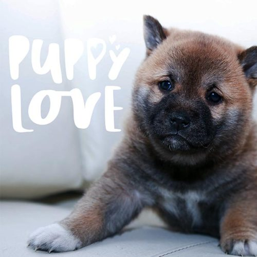 Puppy Love Word Art PNG