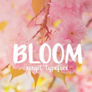 Bloom Font for Holidays
