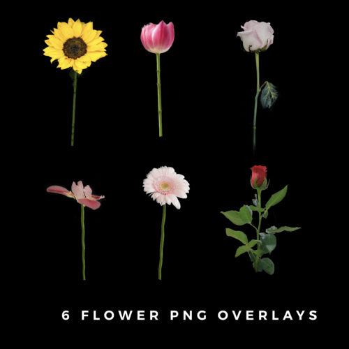 Flower PNG Overlays